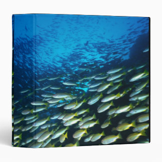 Large group of Bigeye Snapper fish swimming 3 Ring Binders