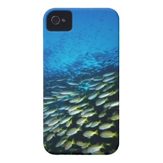 Large group of Bigeye Snapper fish swimming Case-Mate iPhone 4 Cases