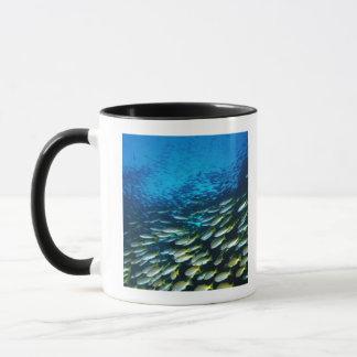 Large group of Bigeye Snapper fish swimming Mug