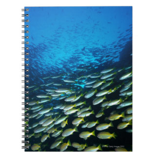 Large group of Bigeye Snapper fish swimming Note Books