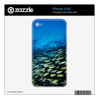 Large group of Bigeye Snapper fish swimming Skins For iPhone 4S