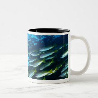 Large group of Bigeye Snapper fish swimming Two-Tone Coffee Mug