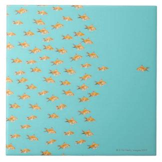 Large group of goldfish facing one lone goldfish ceramic tile