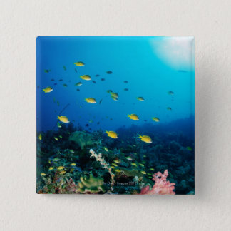Large group of Ocellated Orange fish swimming Button