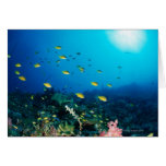 Large group of Ocellated Orange fish swimming Card