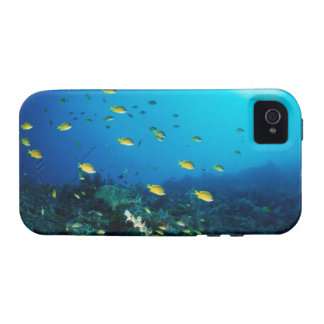 Large group of Ocellated Orange fish swimming iPhone 4/4S Cover