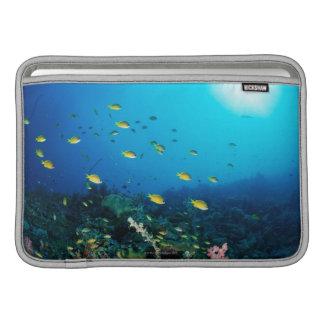 Large group of Ocellated Orange fish swimming MacBook Sleeves