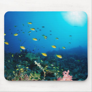 Large group of Ocellated Orange fish swimming Mouse Pad