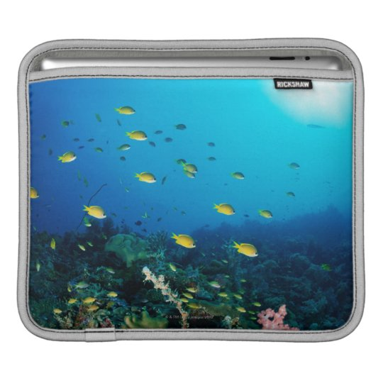 Large group of Ocellated Orange fish swimming Sleeve For iPads