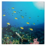 Large group of Ocellated Orange fish swimming Tile