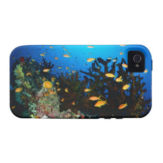Large group of Sea Goldie fish swimming iPhone 4/4S Covers