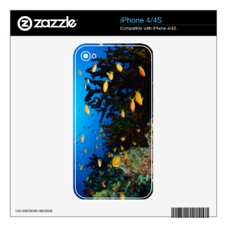 Large group of Sea Goldie fish swimming Decals For iPhone 4S