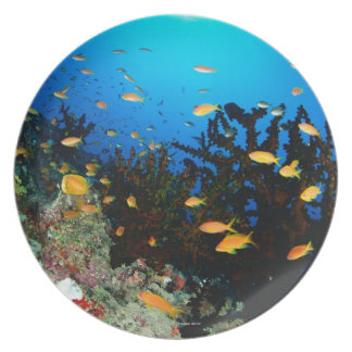 Large group of Sea Goldie fish swimming Melamine Plate