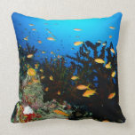 Large group of Sea Goldie fish swimming Pillows