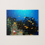 Large group of Sea Goldie fish swimming Puzzle