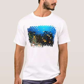 Large group of Sea Goldie fish swimming T-Shirt