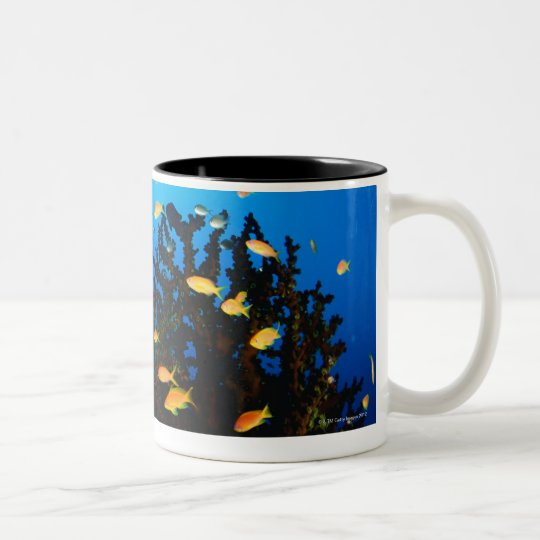 Large group of Sea Goldie fish swimming Two-Tone Coffee Mug