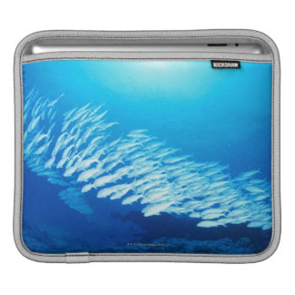 Large group of Yellowfin Goatfish swimming Sleeves For iPads