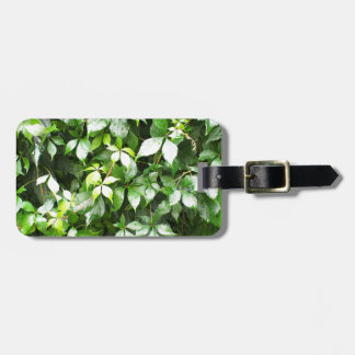 Large growths of green ivy creeping luggage tag