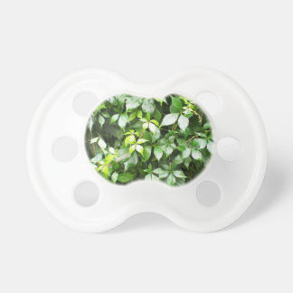 Large growths of green ivy creeping pacifier