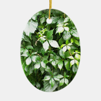 Large growths of ivy creeping wild closeup ceramic ornament