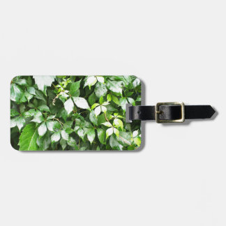 Large growths of ivy creeping wild closeup luggage tag