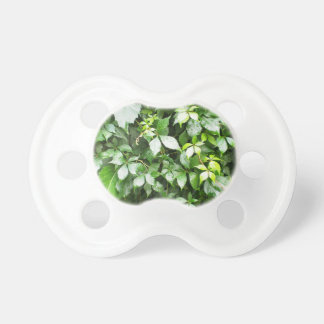 Large growths of ivy creeping wild closeup pacifier