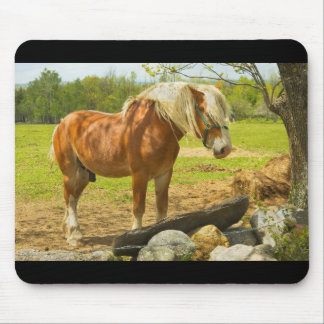 Large Horse Near Stone Wall In Spring Farm Field Mouse Pad