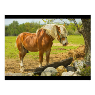 Large Horse Near Stone Wall In Spring Farm Field Post Cards