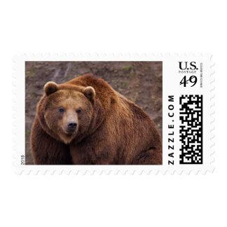 Large Kodiak Bear Postage Stamp
