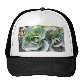 Large leaves of a cabbage plant trucker hat