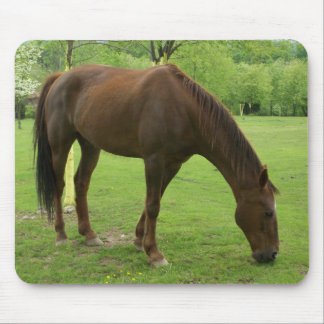 Large Male Horse Eating Grass Mousepad
