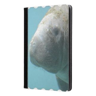 Large Manatee Underwater
