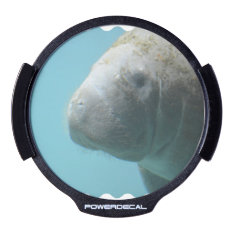Large Manatee Underwater Led Car Decal at Zazzle