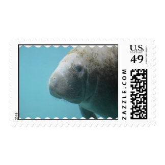 Large Manatee Underwater Postage