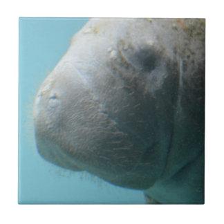 Large Manatee Underwater Tile