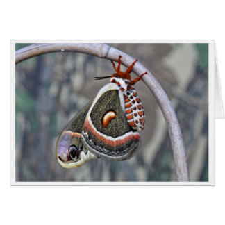 Large Moth Card