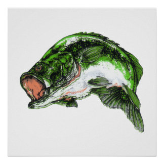Large mouth Bass Posters