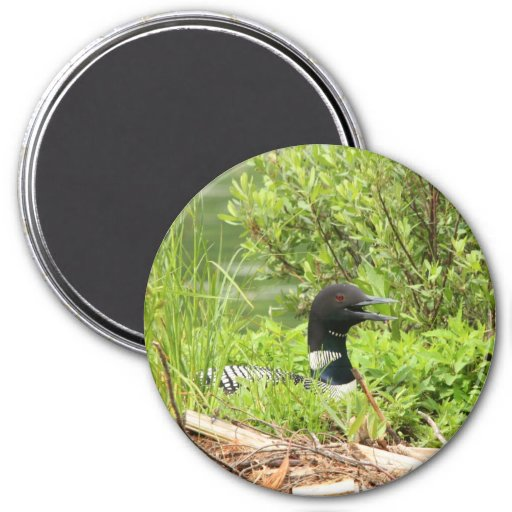 Large nesting Loon Magnet