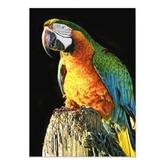 Large Orange and Teal Parrot on a Stump Card
