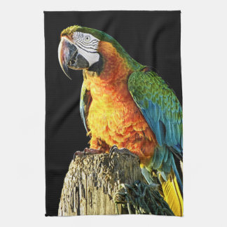 Large Orange and Teal Parrot on a Stump Towels