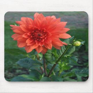 Large Orange Dahlia Flower bud Mousepad