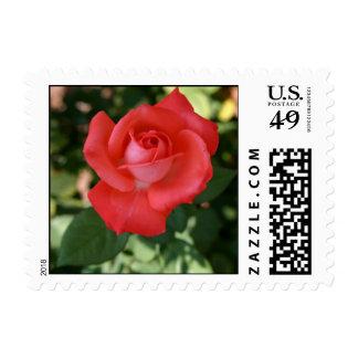 Large orange rose flower blossom up close postage stamp