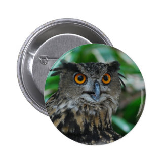 Large Owl Button