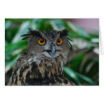 Large Owl Greeting Card