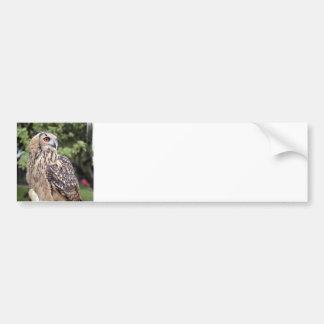 Large Owl on Fence Bumper Sticker