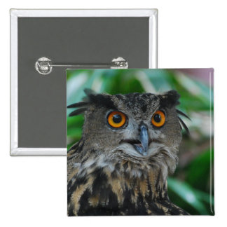 Large Owl Pin