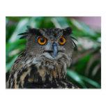 Large Owl Postcard