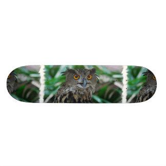 Large Owl Skateboard