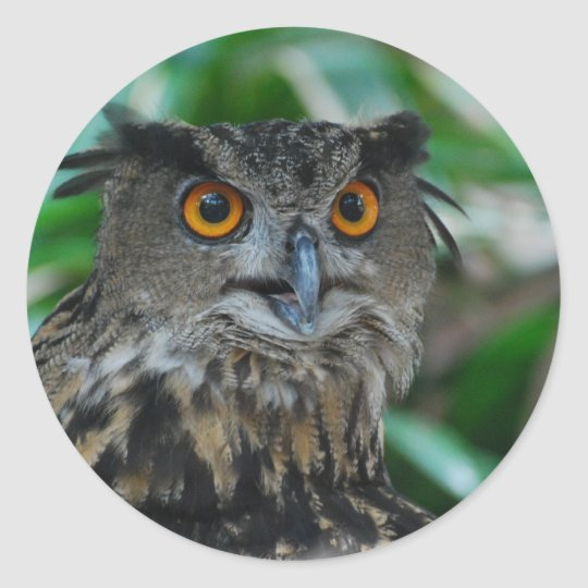 Large Owl Stickers